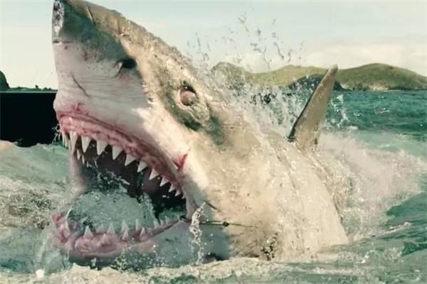 蜈支洲岛鲨鱼袭击事件 游客在三亚拍到鲸鲨视频(神奇)